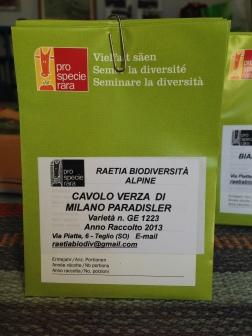 Cavolo Verza Milano Paradisler - Raetia Biodiversita Alpine