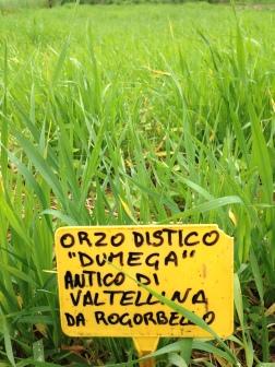 Raetia Cereali - Orzo distico Dumega Valtellina