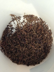 Raetia - Perilla Fruttescens Semi