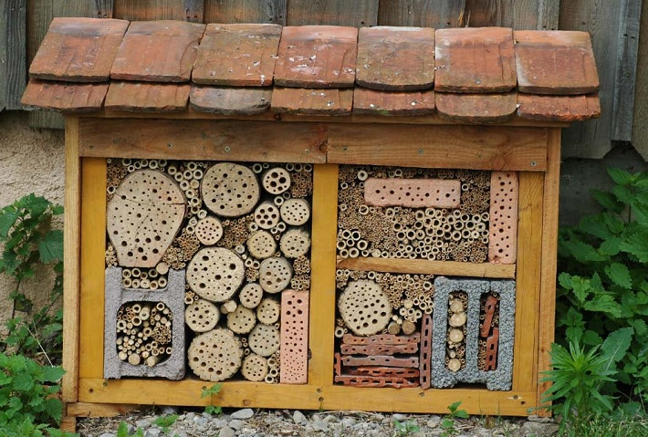 54 Insect house