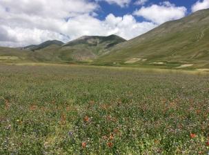 Castelluccio di Norcia - Un Lato della Valle