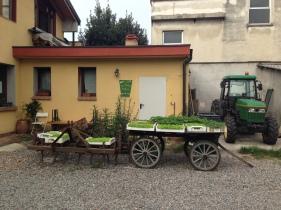 Agricola Cassani - Interno della Corte