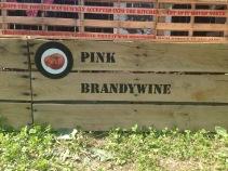 Exponymi - Pomodori Pink Brandywine