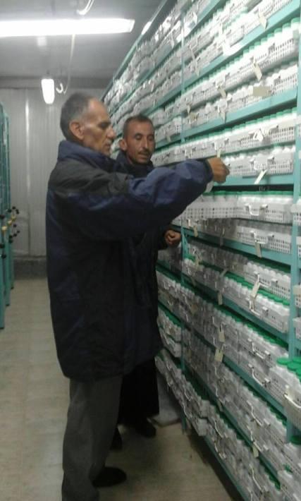 Salvasemi siriani ICARDA banca