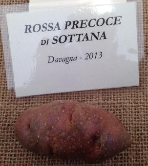 Mandillo dei Semi 2015 - Patata Rossa Precoce di Sottana