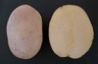 patata-flair-1