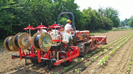 Arvaia - Irrigazione