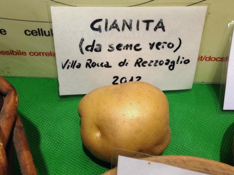 Gianita da Seme Vero - Villa Rocca di Rezzoaglio